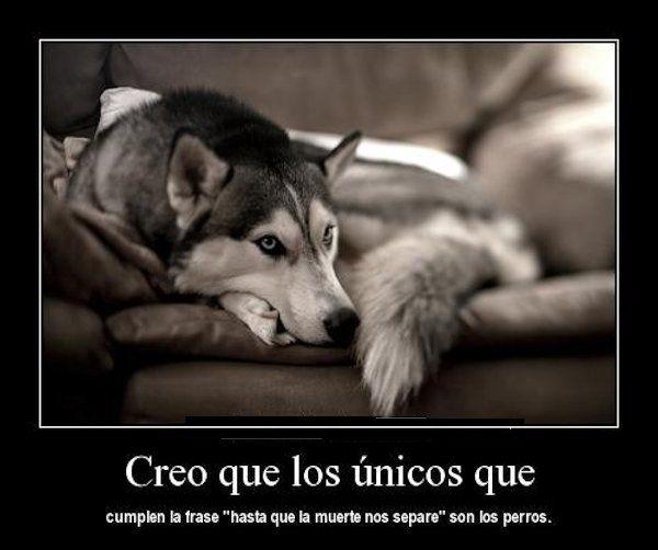 Frases Para Perritos Muertos Jpg 600 502 Perros Frases Perros Amor De Perro