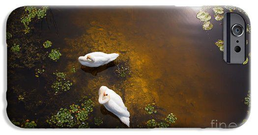 Two swans with sun reflection on shallow water iPhone 6 Case. This has been a real challenge to take this photo of these swans as I had to find a high point to shoot downwards. Look carefully and you can see the fish swimming.