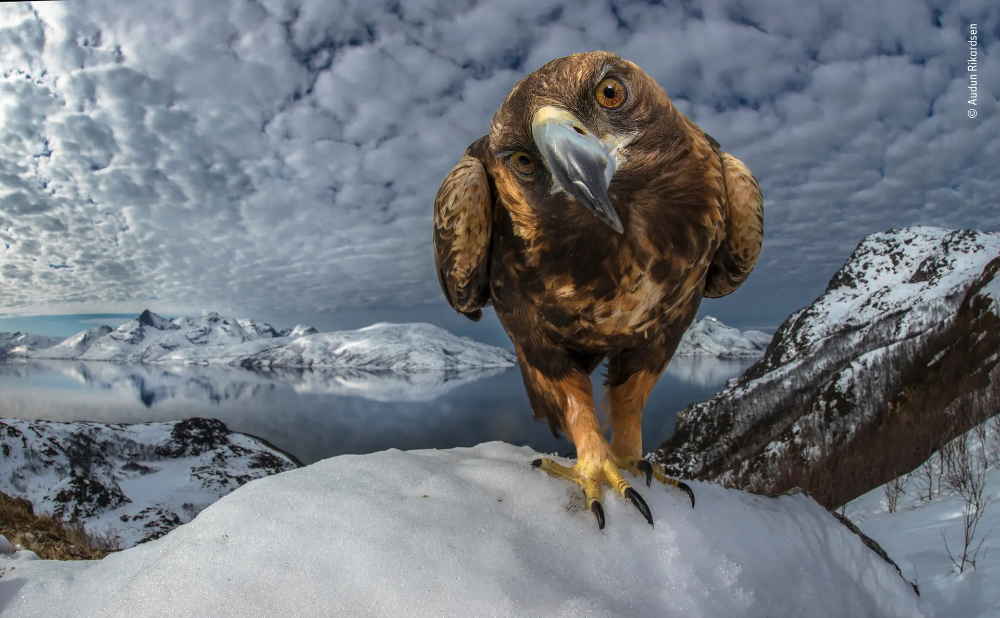Wildlife Photographer Of The Year Lumix People S Choice Shortlist 2019 In Pictures Wildlife Wildlife Photography Animals