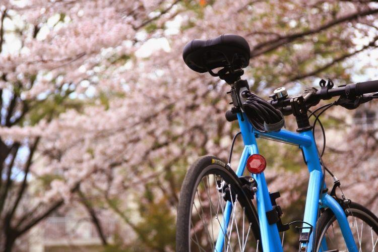 写真:桜と自転車(フリー投稿)