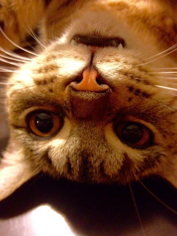 Cat selfie fangs