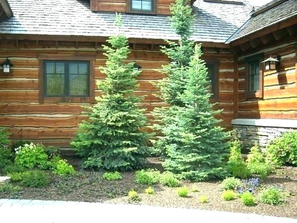 Small Trees For Flower Beds Small Pine Trees Landscape Ideas Under
