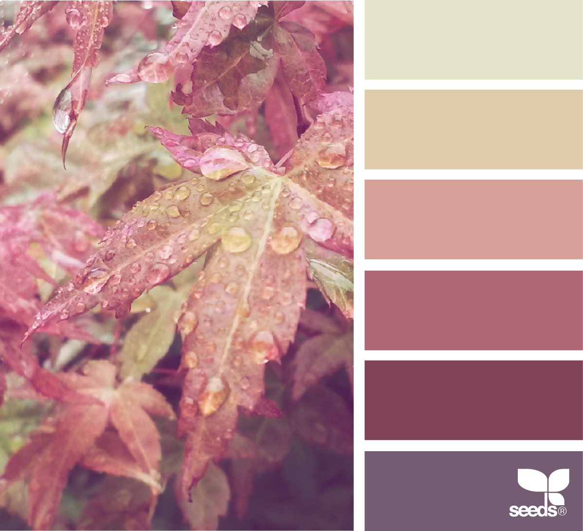 Color Dew | Color inspiration, Color combos and Design seeds