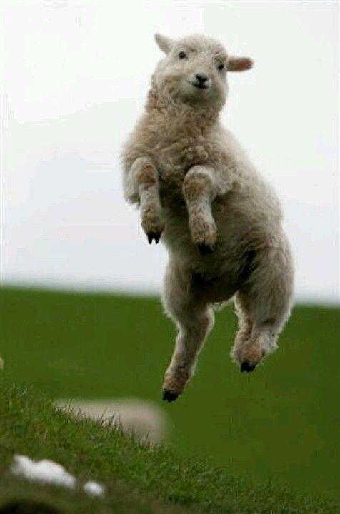 Jump for joy | Cute animals, Animals, Baby animals