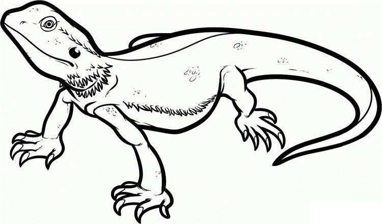 Bearded Dragon Lizard Coloring Pages Dragon Coloring Page Unicorn Coloring Pages Cartoon Drawings