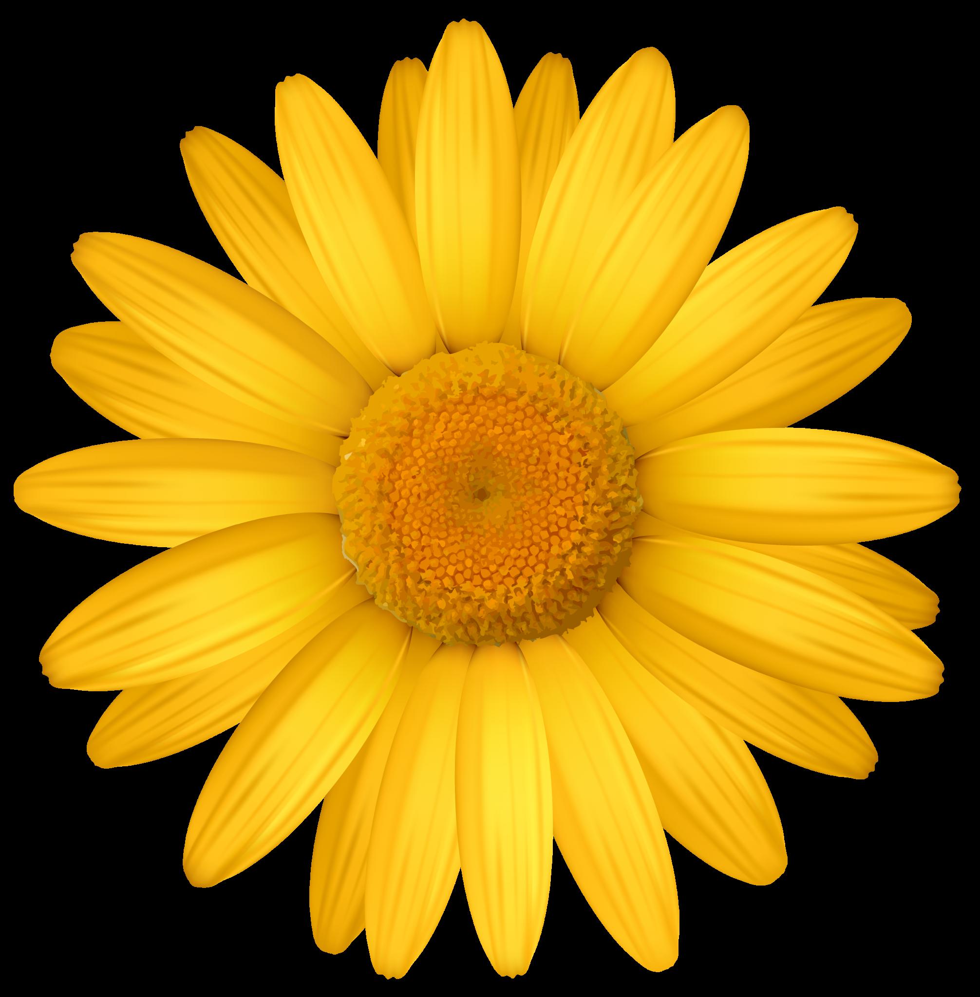 Yellow Widescreen Backgrounds Flower Clipart Png Flower Clipart Daisy