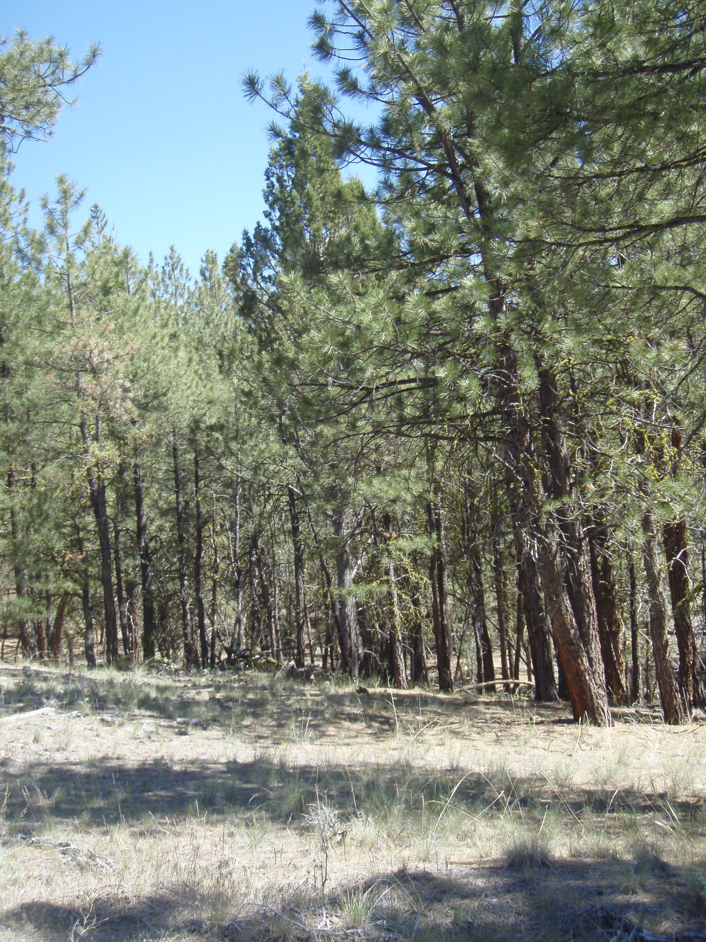 Beautiful 38 acres for sale in oregon only 199month