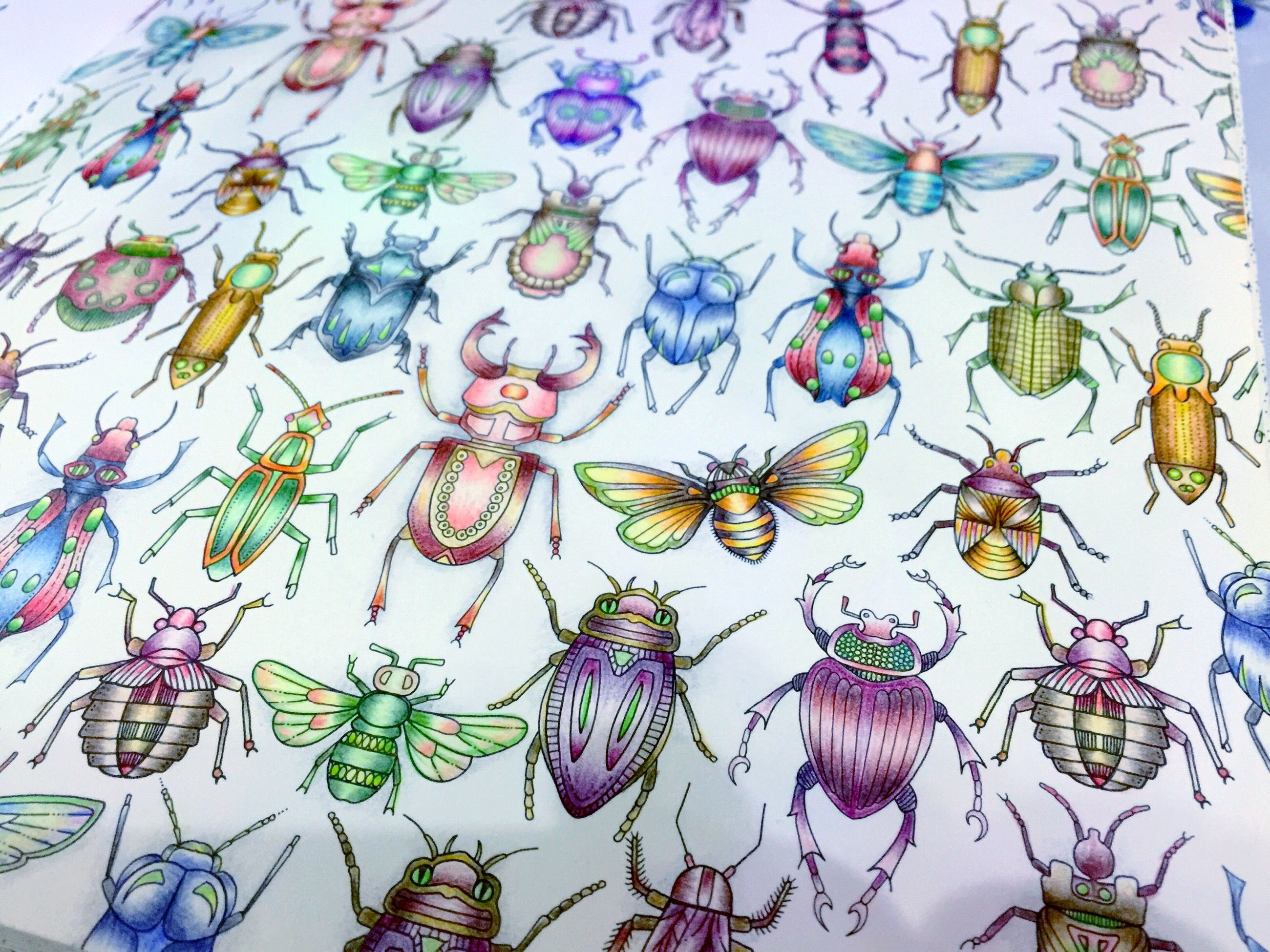 Insects Coloured By Meg 10 12 15 6