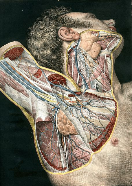 Pin On Anatomical