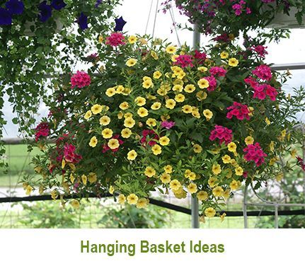 Photo of Hanging Baskets Article