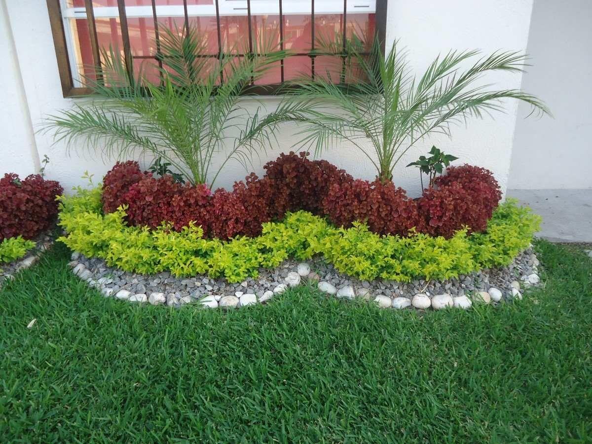 Plantas curativas jardines peque os jard n y peque os for Jardines exteriores para casas