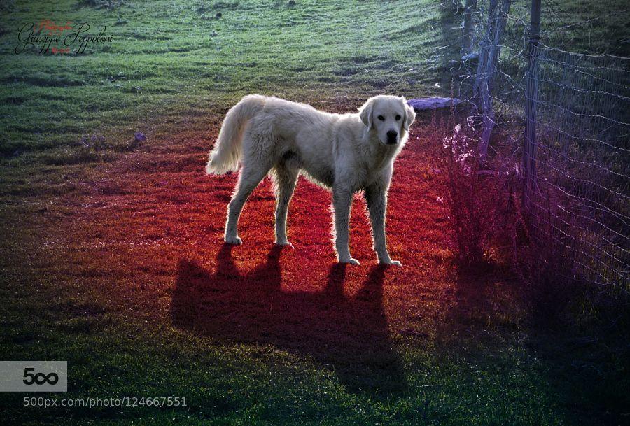 Dog de giuseppepeppoloni