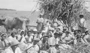 barbados plantations - Yahoo Image Search Results
