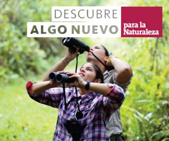 Receta Desde Adentro: Pastelón de Pana | Mi Puerto Rico Verde
