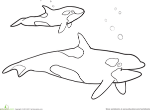 Orca Whale Coloring Pages Animal Coloring Pages Whale Coloring Pages Coloring Pages For Kids