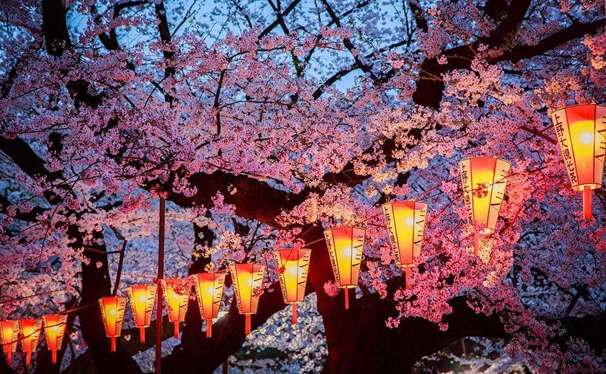 17 Magical Pics Of Japan's Cherry Blossom By National