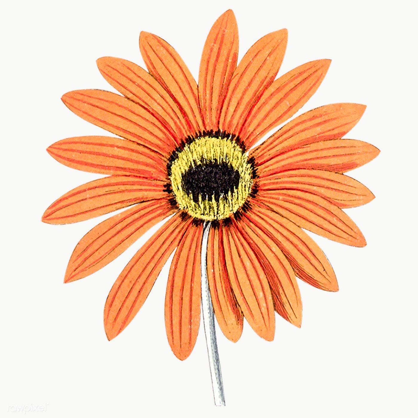 Orange Flower Png Image Clipart Flower Png Images Flower Silhouette Orange Flowers