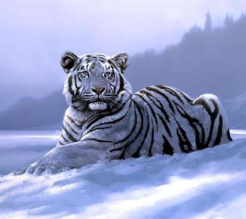 Found On Life Of Planet Earthtumblrcom Via Tumblr Big Cats 3
