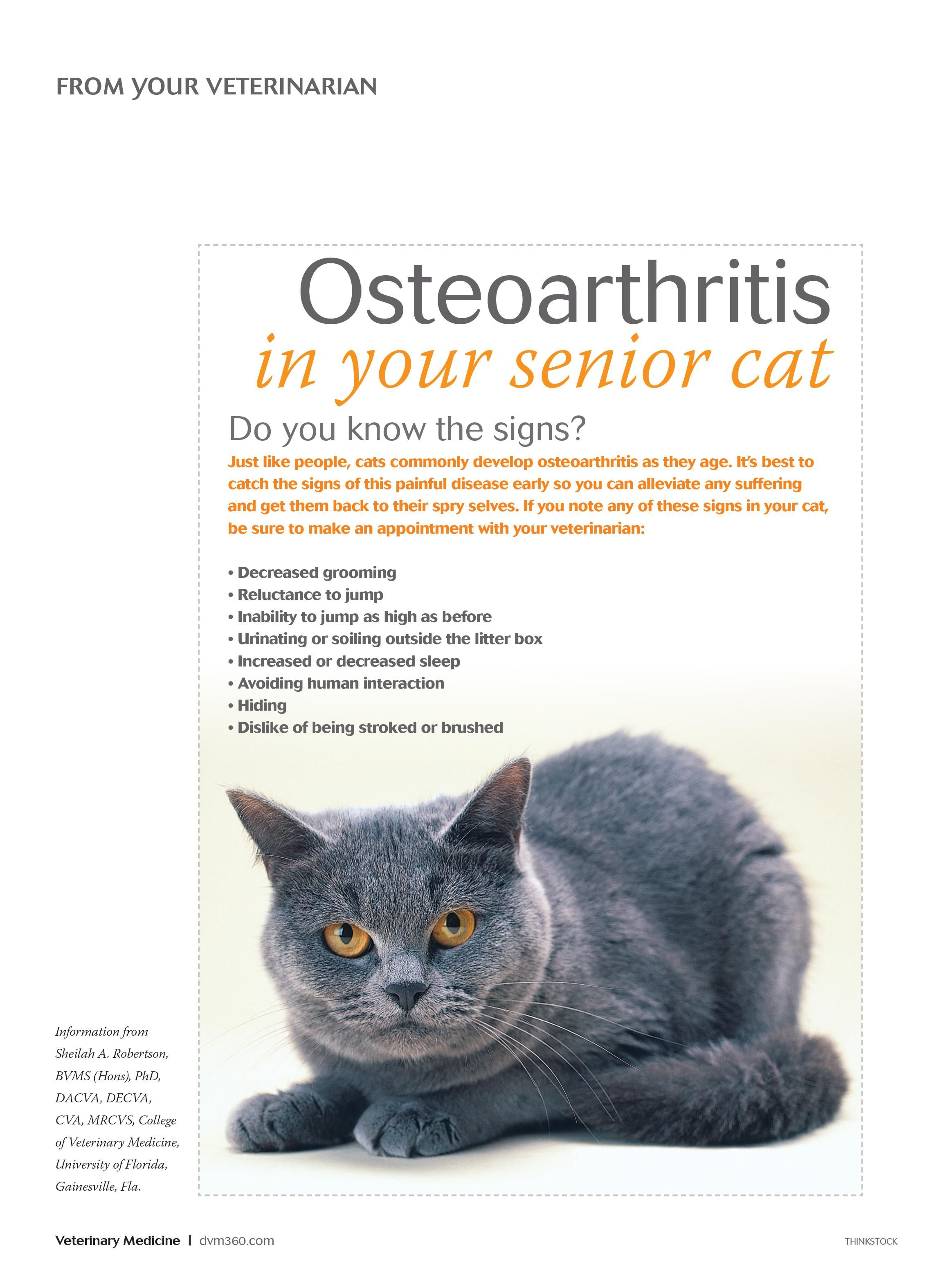 Osteoarthritis In Your Senior Cat Dvm360 Senior Pet Care Senior Cat Senior Cat Care