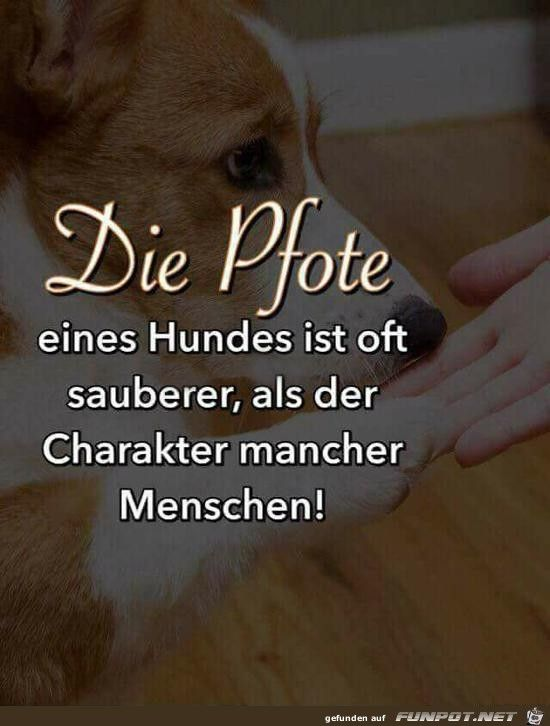 pin von annette voellmer auf hunde dog quotes animal. Black Bedroom Furniture Sets. Home Design Ideas