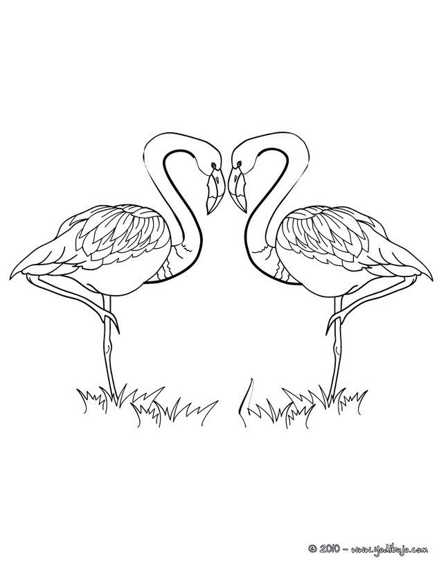 Dibujo para colorear FLAMINGOS CORAZON | LOVE mi amor | Pinterest ...