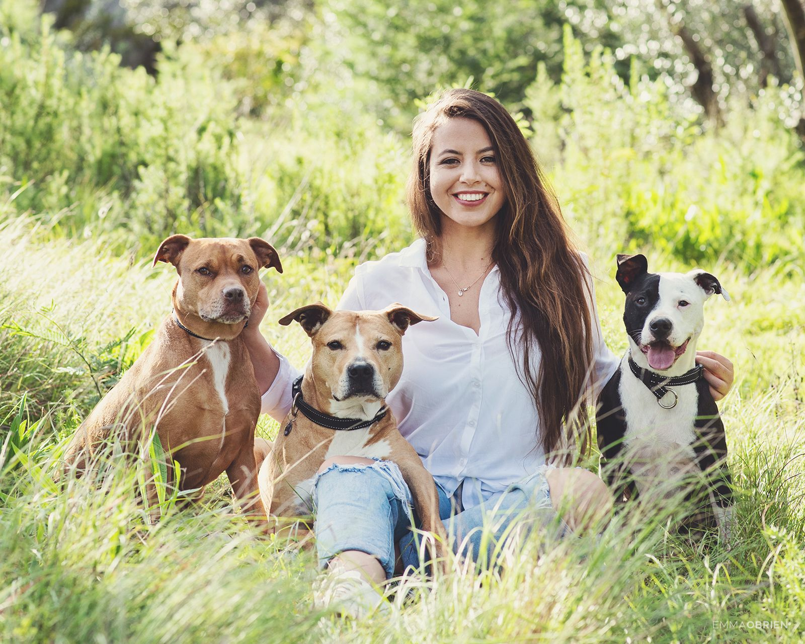 Puppies for adoption in paarl