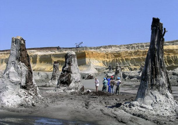 Bukkabrany, Hungary - these tree stumps did not fossilize