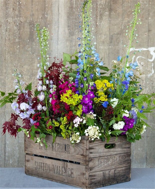 Florists Rebel Rebel are devotees of British-grown delphiniums. Gus took delphiniums as his focus flower and combined them in this riotous and naturalistic display in a vintage wooden crate. Perfect for a summer party, deep window or mantelpiece, Gus's design blends delphiniums with viburnum, stocks, euphorbia, sweet williams and British-grown foliage. Delphiniums are available as cut flowers from mid May to end August, weather permitting.