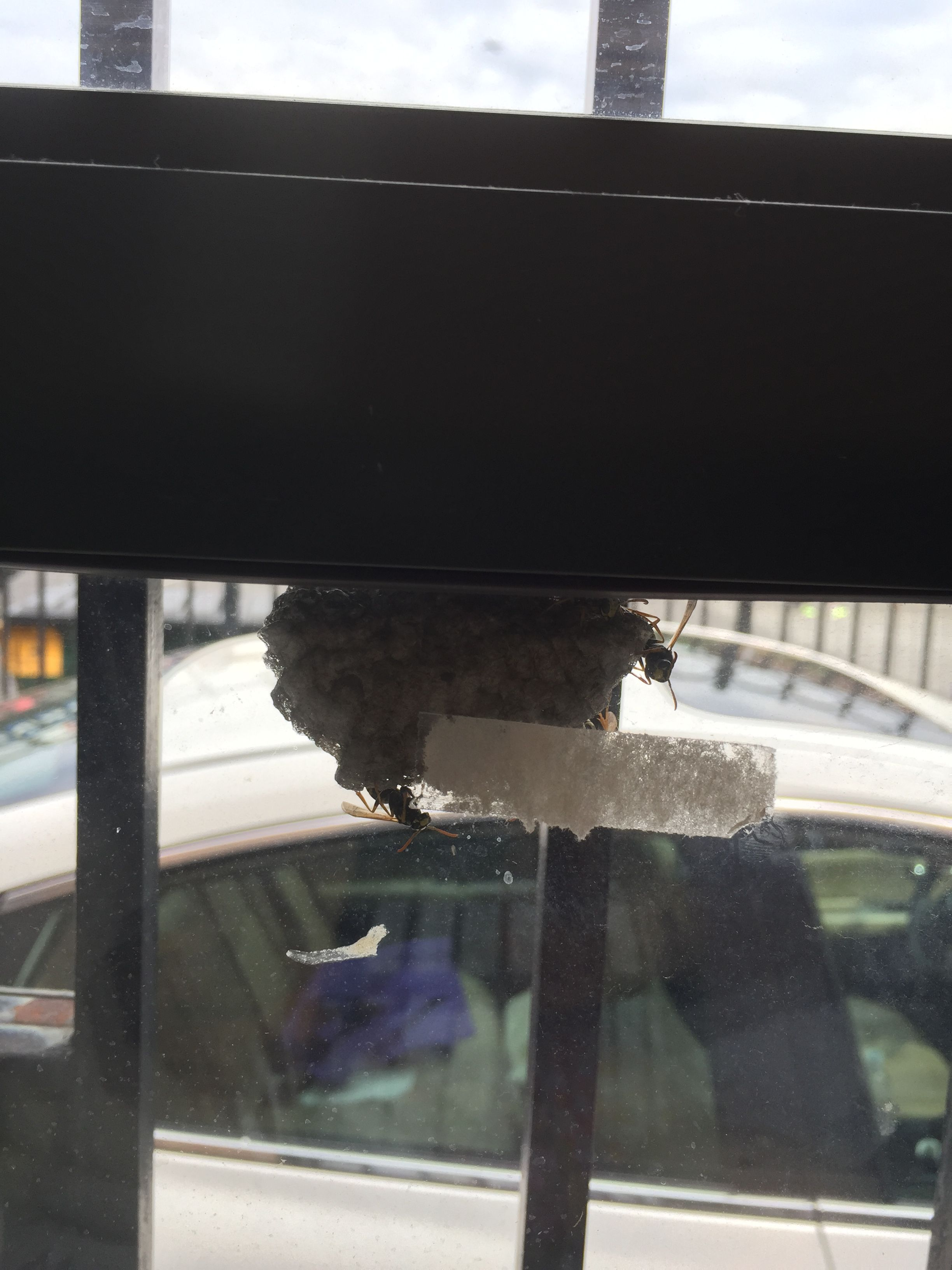 Yikes! Outside At our Mercy Center window...Yellow Jackets beginning their nest! They Have been Removed!