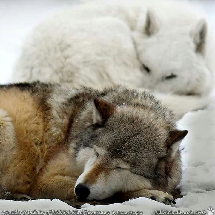 Pin on wolf love