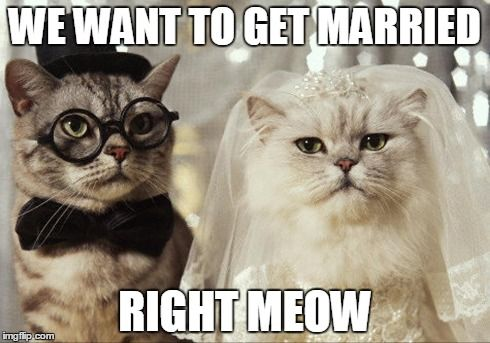 Cats Getting Married Right Meow! More Funny Wedding Photos
