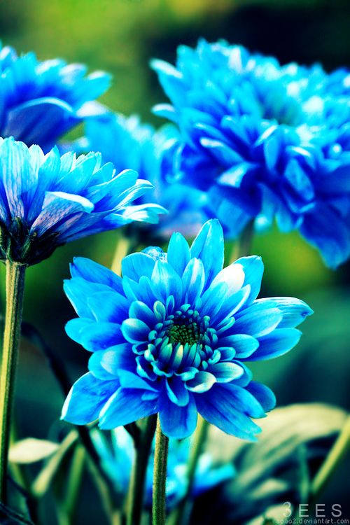 Pin By Jerilynn Garry On Flowers Blue Flowers Beautiful Flowers Amazing Flowers