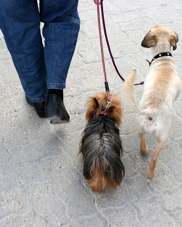 Train Your Dog To Heel Using Clicker Training Wikihow Loose