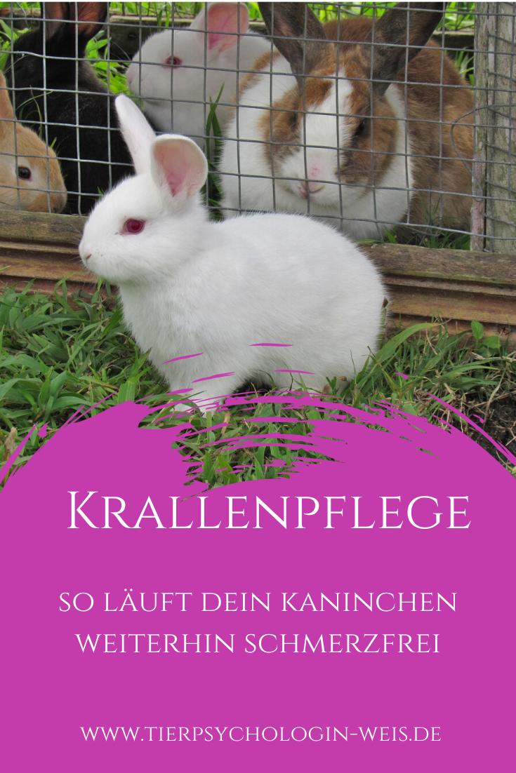 Pin Auf Kaninchen