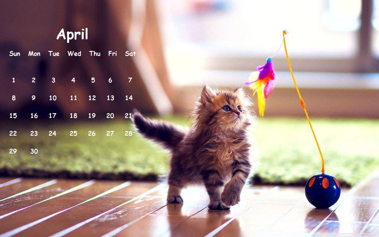 Image result for cat calendar april