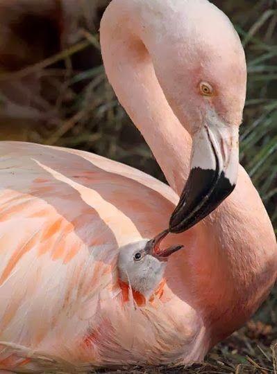 Μωρό μεγάλο πουλί