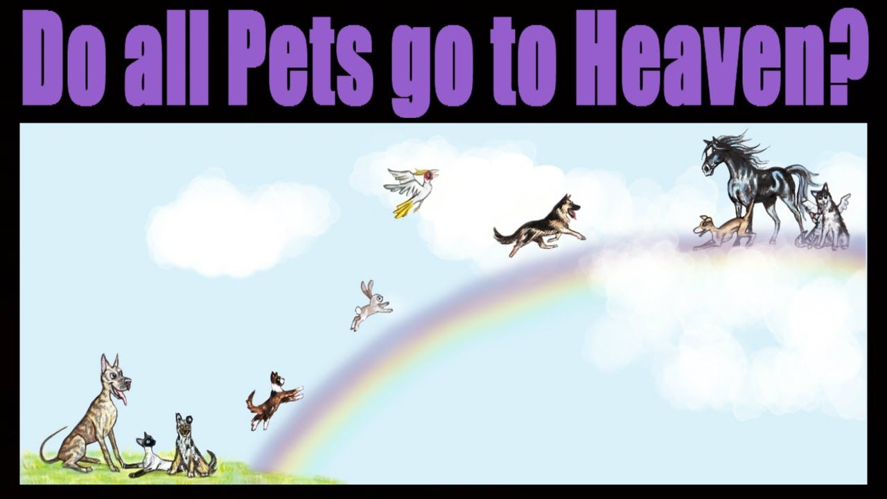 Do All Pets Go To Heaven Youtube Pets Dog Heaven Heaven
