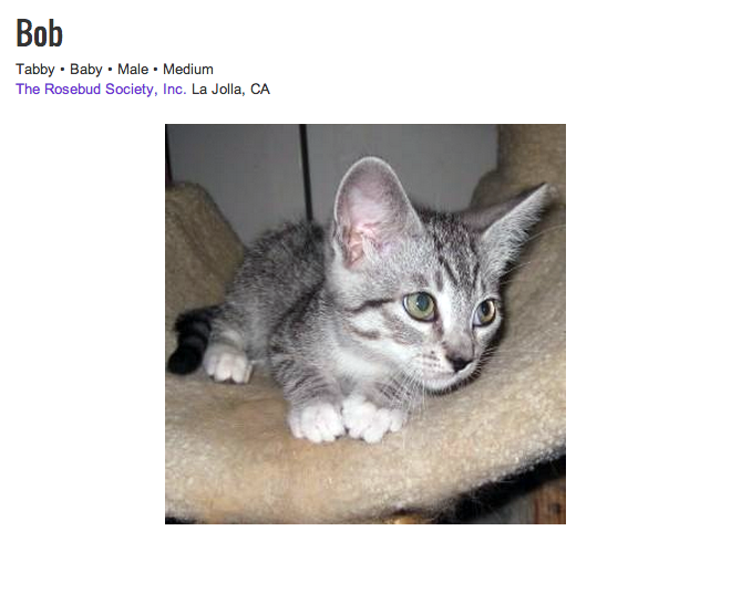 Available for adoption by Rosebud Society in La Jolla, Ca