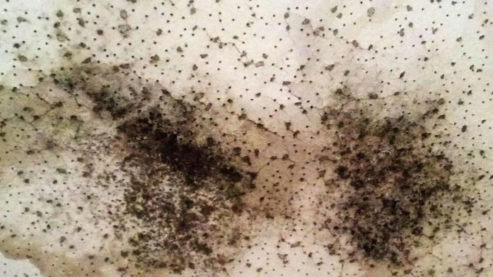 Nema says if mold is not taken care of properly it will