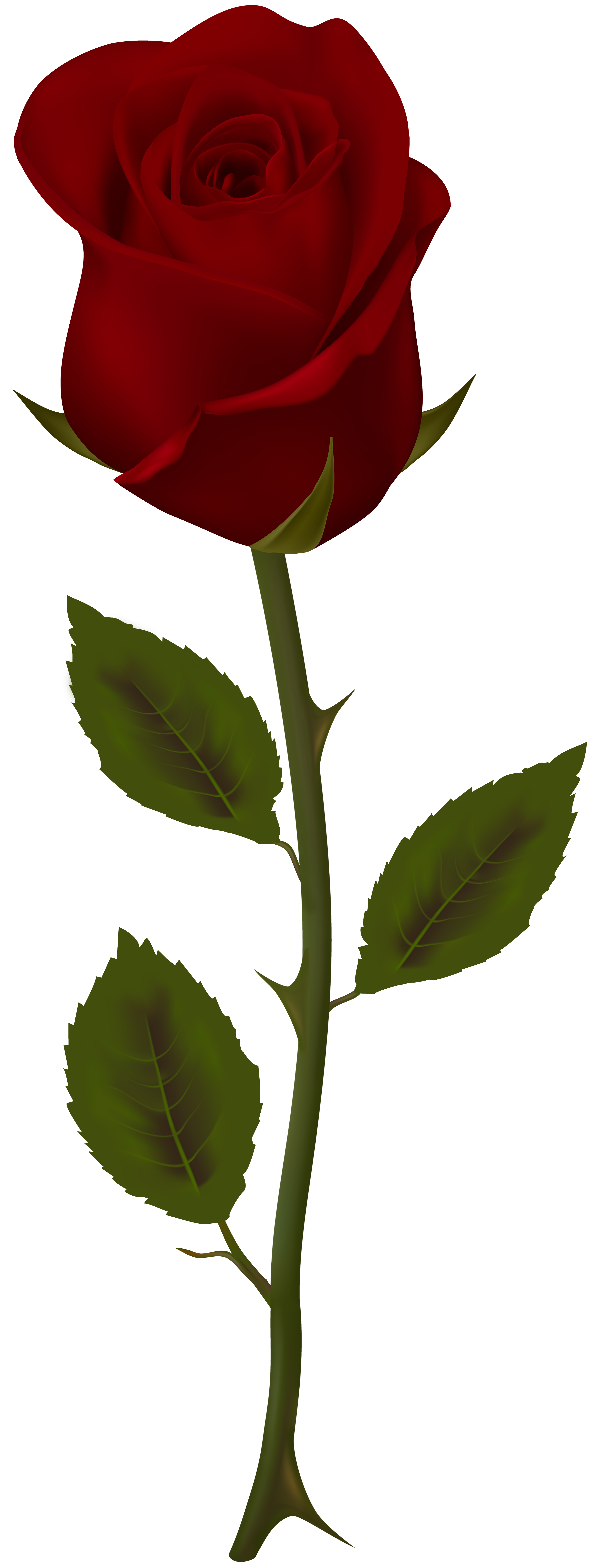 Dark Red Rose Transparent Png Clip Art Gallery Yopriceville High Quality Images And Transparent Pn Dark Red Roses Red Roses Wallpaper Rose Flower Pictures
