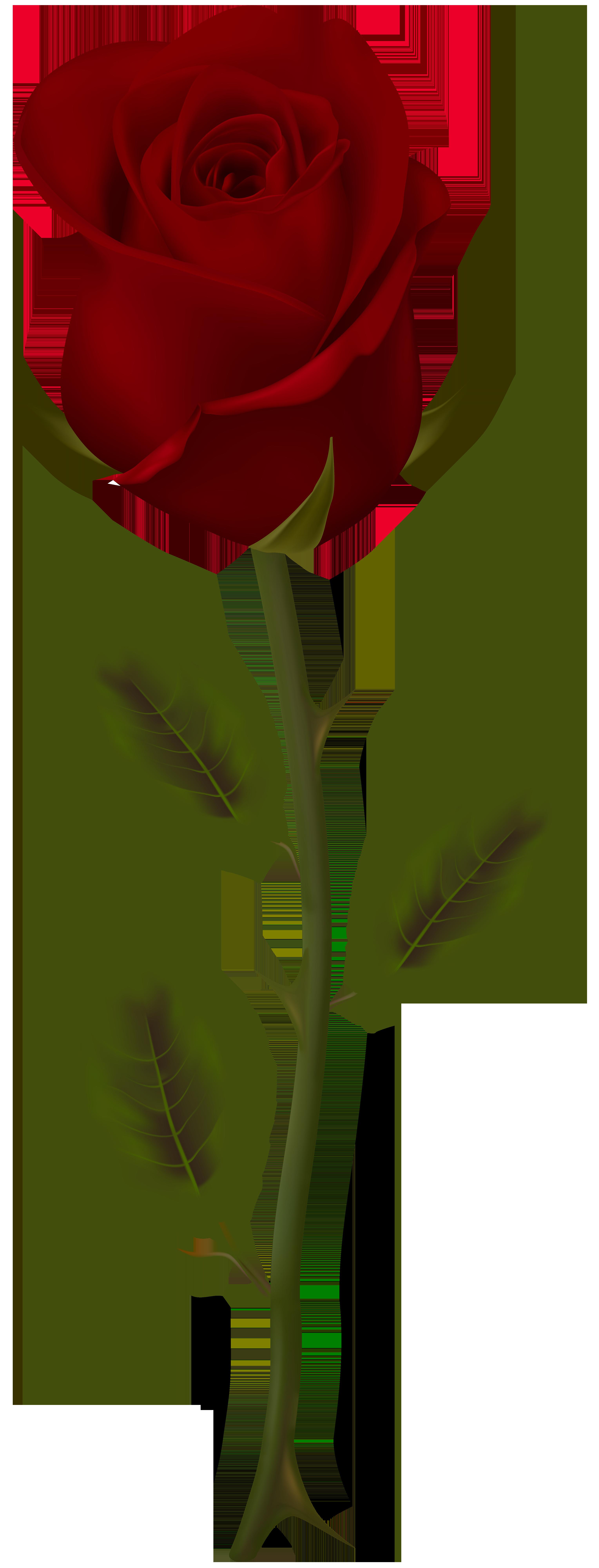 Dark Red Rose Transparent PNG Clip Art Розы, Красивые цветы