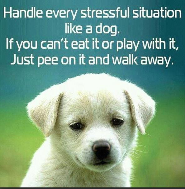 Quote Handle Stress Like A Dog Too Funny With Images Funny