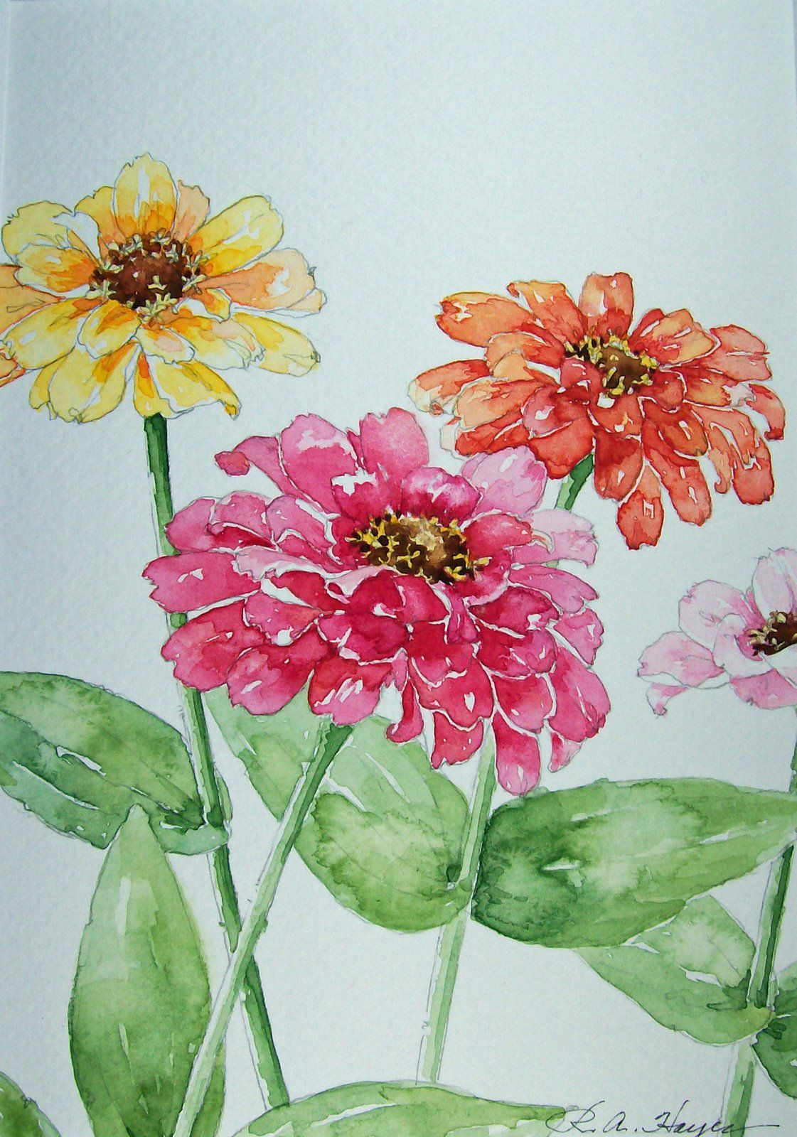 Zinnias Watercolor Painting Floral Watercolor Watercolor