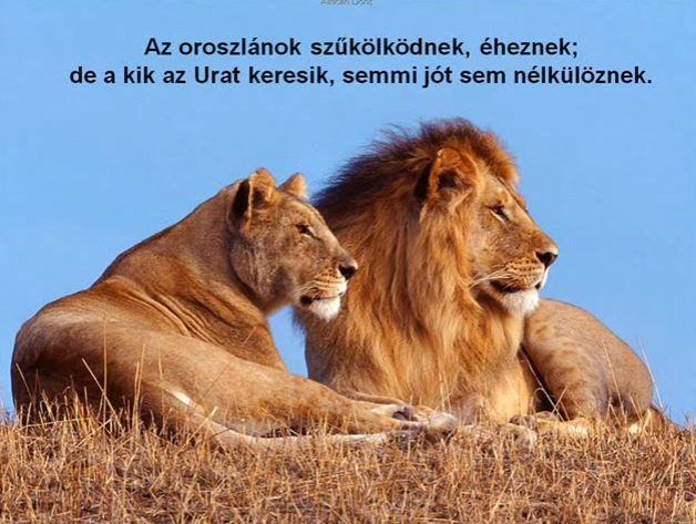 Az oroszlánok ...