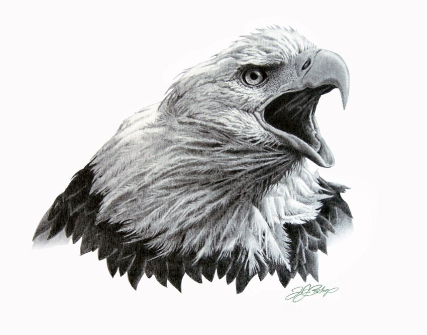 how to draw a bald eagle head