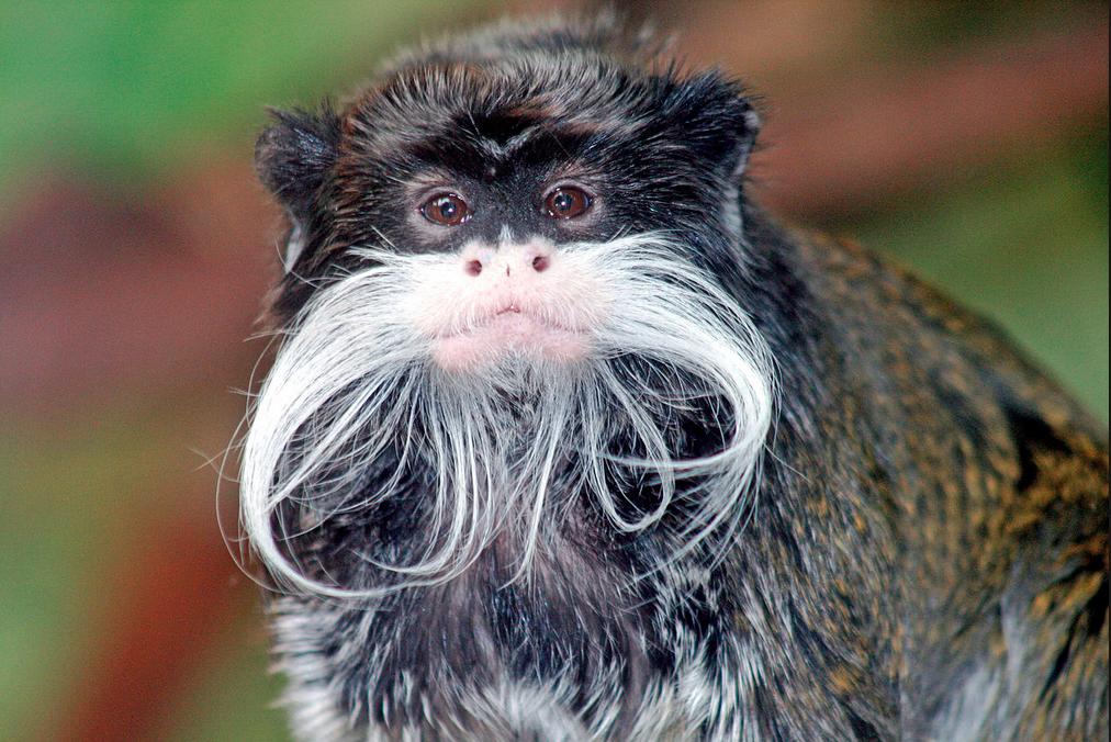 that's a moustache