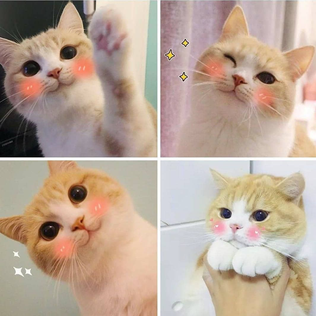 Cutiescats Cat Catmemes Memes Memesdaily Catsofinstagram Funny Comedy Cute Adorable Fluffy Animals Animalmemes Wholeso Cats Cat Memes Animal Memes