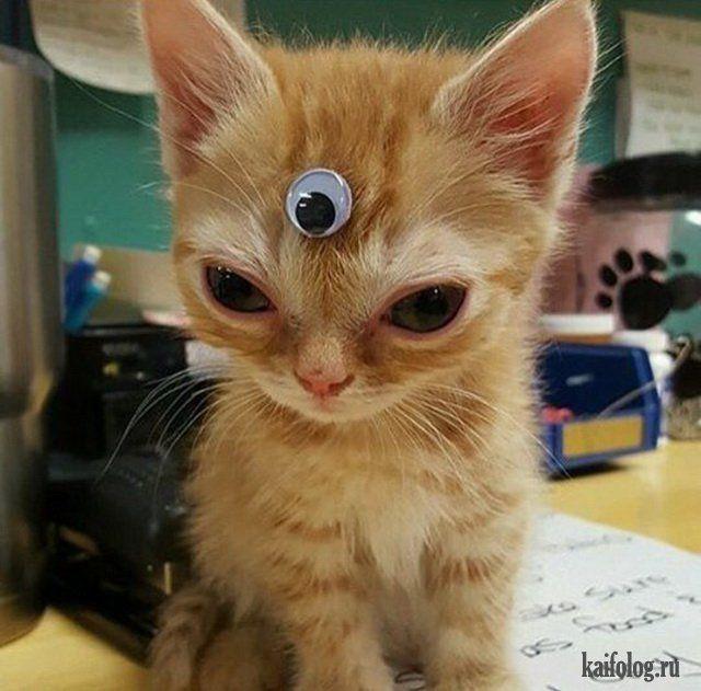 Прикольные котики (45 фото) | Weird animals, Cute animals, Animals