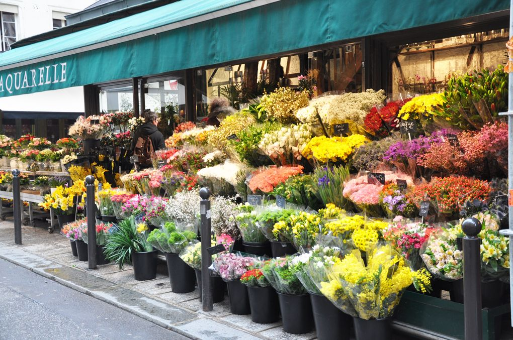 Paris flower shop Where to buy flowers, Cheap flowers