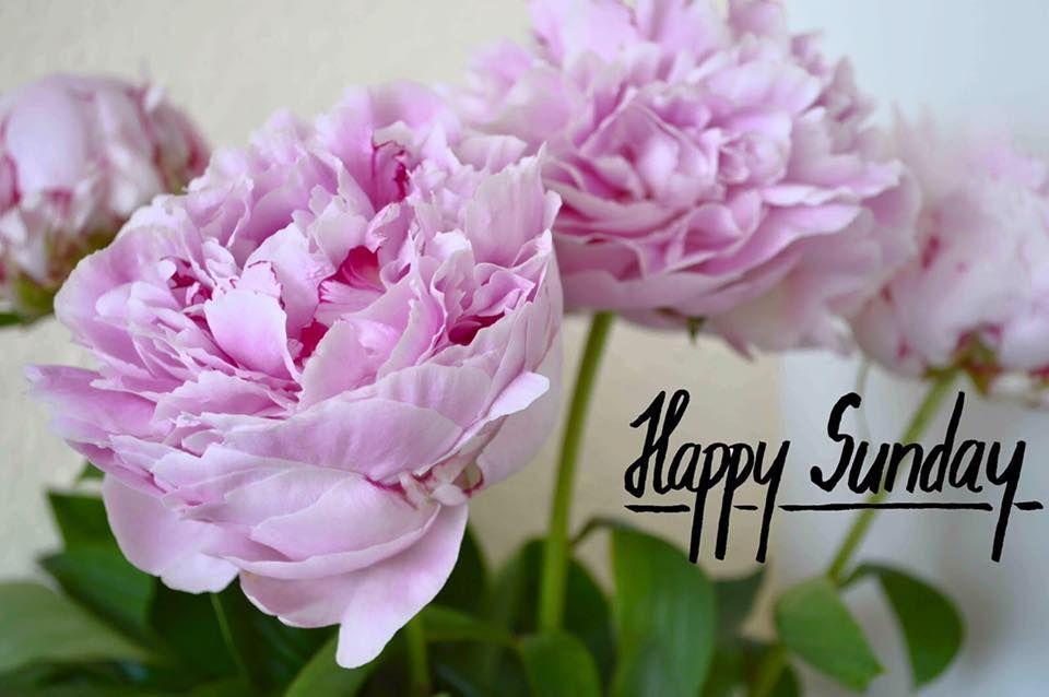Happy Sunday! Enjoy your day of rest. Happy sunday